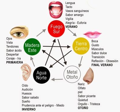 Resultado de imagen para organos y emociones segun la medicina china